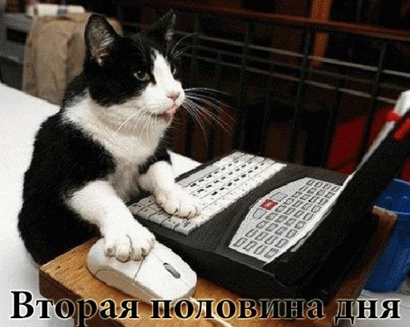 http://cs14112.vk.me/c540102/v540102697/23ed6/mZm17v6kpfw.jpg