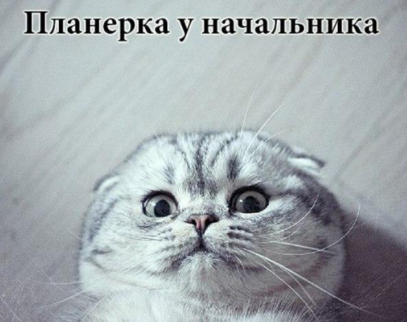 http://cs14112.vk.me/c540102/v540102697/23edd/XDWTo76BmnU.jpg