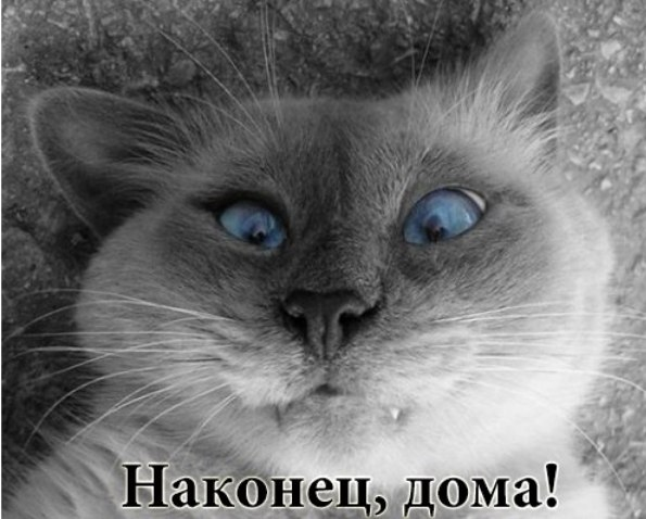 http://cs14112.vk.me/c540102/v540102697/23ef2/eAIRFkX_DWE.jpg