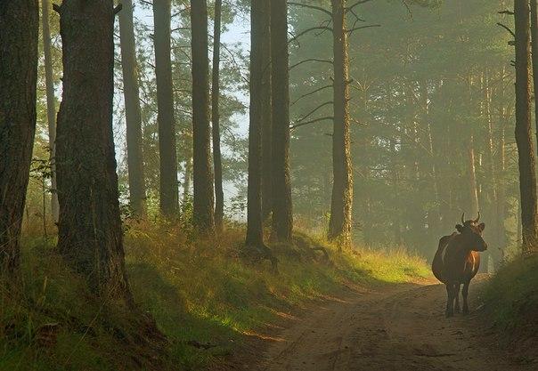 Природный парк «Вепсский лес». Ленинградская область, Россия. Автор фото: Петр Косых.