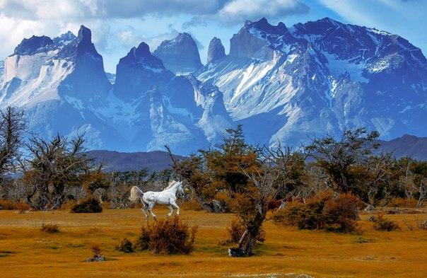 «Ветер свободы». Национальный парк Торрес-дель-Пайне, Чили. Автор фото — Вадим Балакин