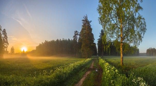 Весенний рассвет в парке Павловска. Автор фото — © Фёдор Лашков  |  National Geographic Россия