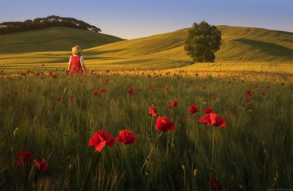 До весны осталось всего три дня! Предлагаем вместе с нами настроиться на весеннюю волну и посмотреть тёплые фотографии цветущих маков, сделанные участниками нашего фотоклуба «Ценный кадр»