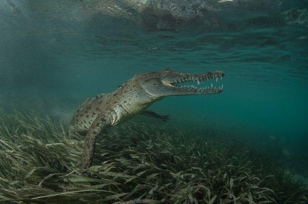 «Крокодилья грация». Автор фото — Дмитрий Старостенков