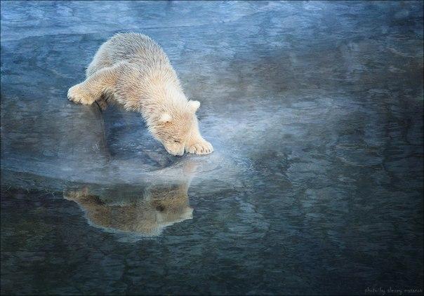 «Мелодия севера». Автор фото — Алексей Масанов