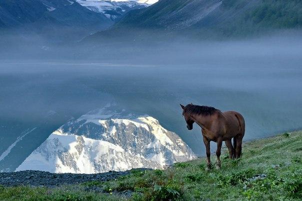 Отражение горы Белуха в озере Аккем, Алтай. Автор фото — Роза Ибрагимова
