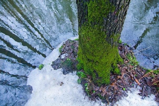 «Весна». Национальный парк «Лосиный остров», Московская область. Авторы фото — Александр и Наталия Федосовы