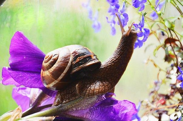 «Запах весны». Автор фото — Мира Иванова