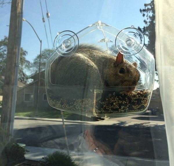 Установил кормушку на окно, что бы понаблюдать за птицами с близкого расстояния...