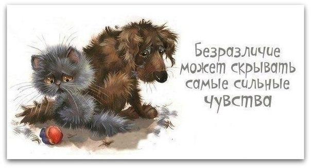 http://cs7065.vk.me/c540102/v540102880/83f2/WiVVZkMsooE.jpg