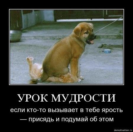 http://cs14102.vk.me/c540102/v540102915/8548/kb0fGNiSWYI.jpg