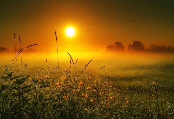 В горячем молоке рассвета. Автор фото – Сергей Домбровский. Доброе утро!