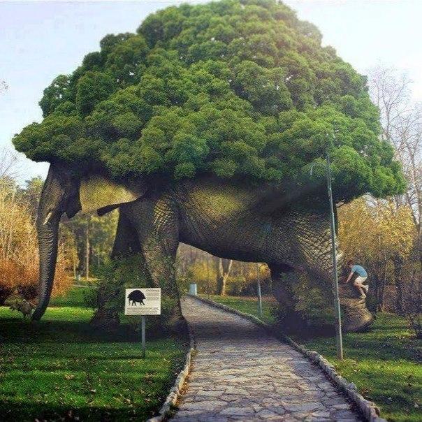 Дерево-шедевр, Великобритания