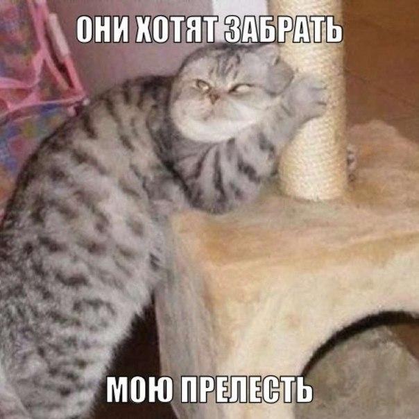 http://cs14113.vk.me/c540103/v540103048/1c2ad/aQIbONwSwOM.jpg