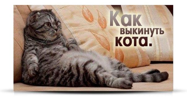 Выбросить кота из дома