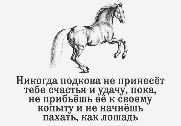 https://cs7050.vk.me/c540103/v540103262/78ff1/UirimtnyD1c.jpg