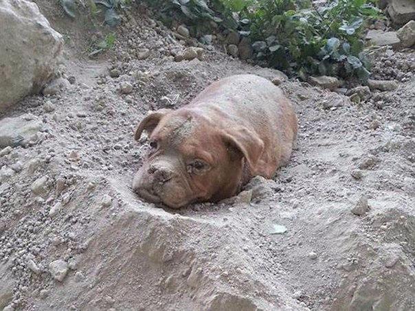 Pedro Dinis гулял со своей собакой, когда он нашёл погребённого в песке пса. Вме...