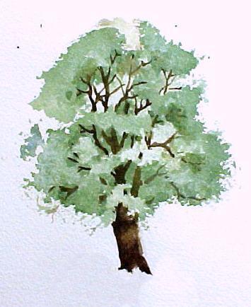 Деревья акварелью