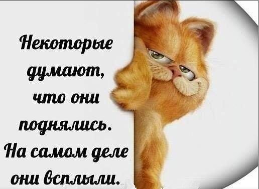 https://cs7050.vk.me/c540103/v540103567/2cbb4/evdO_vnTU54.jpg