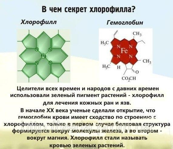 Формула хлорофилла в биологии