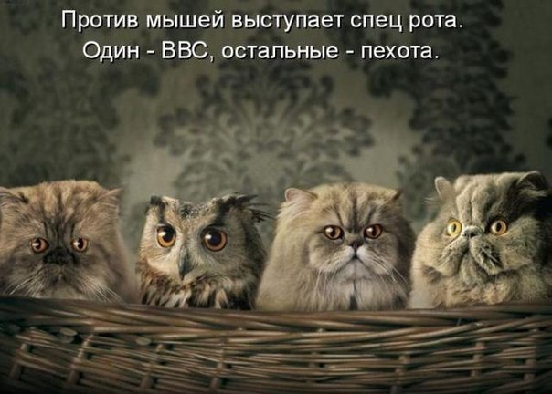 http://cs7065.vk.me/c540103/v540103813/323bf/MOvK0B5wycI.jpg