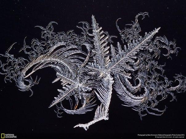 «Ледяное искусство». Фотография узора на оконном стекле. Эстония. Автор фото: Maie Kirnmann.