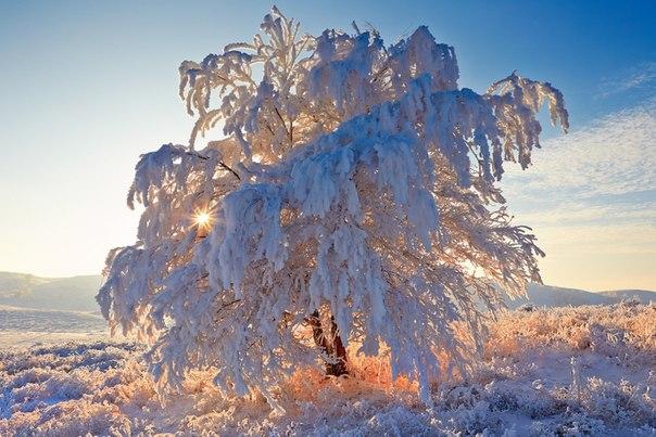 Украшенное изморозью дерево на Южном Урале, Оренбургская область. Автор фото — Алексей Качурин