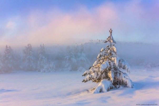 «Морозко». Туманное утро на Ай-Петри, Крым. Автор фото — Антон Петрусь