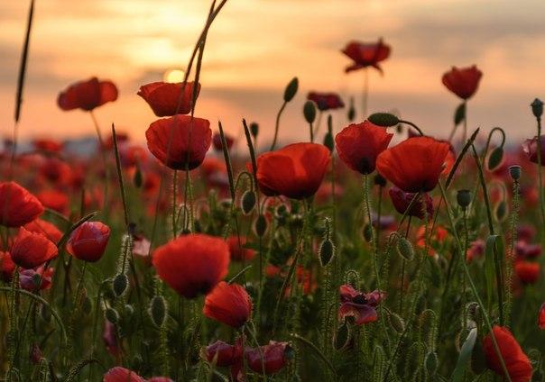 Эту фотоподборку мы посвящаем всем, кто успел соскучиться по ярким летним краскам. Автор фото — Александр Плеханов