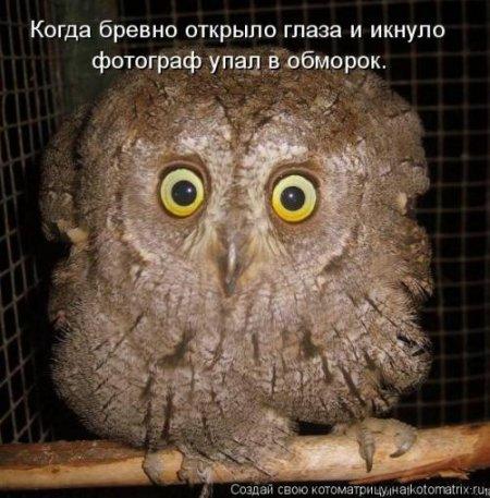 http://cs14109.vk.me/c540103/v540103910/158c3/3VTOZmSLypg.jpg