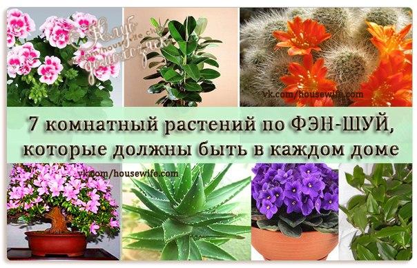 Цветы по фен шуй