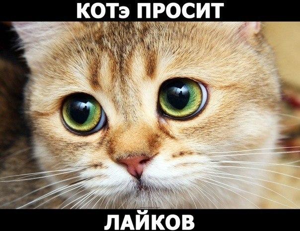 От ДюЙмОвОчКи))