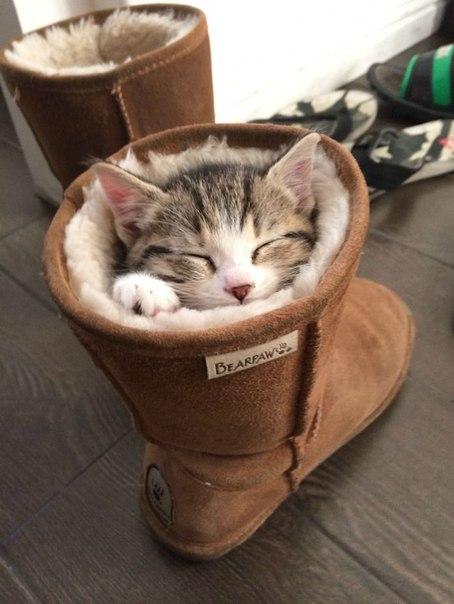30 котов, постигших искусство «Сон-Фу»: ↪ Вот так выглядит идеальное 1 января.