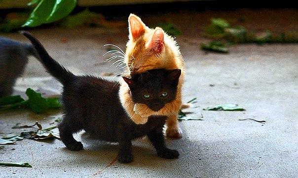 Всем нам иногда нужны зверские обнимашки! ↪