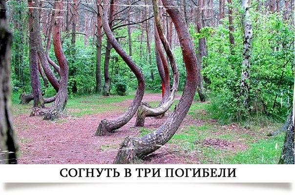 http://cs14108.vk.me/c540104/v540104512/fd5/ySDFKPOCAZY.jpg