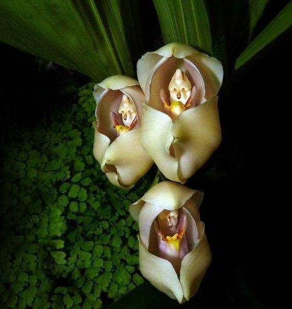 Природа невероятной красоты