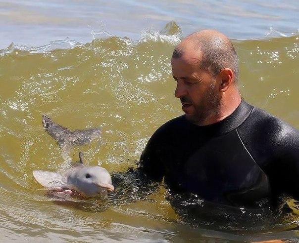 Мир удивителен, господа! ↪ Так, например, выглядит детеныш дельфина