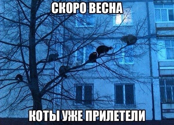 https://pp.vk.me/c540104/v540104577/3d975/04ienUV_dac.jpg