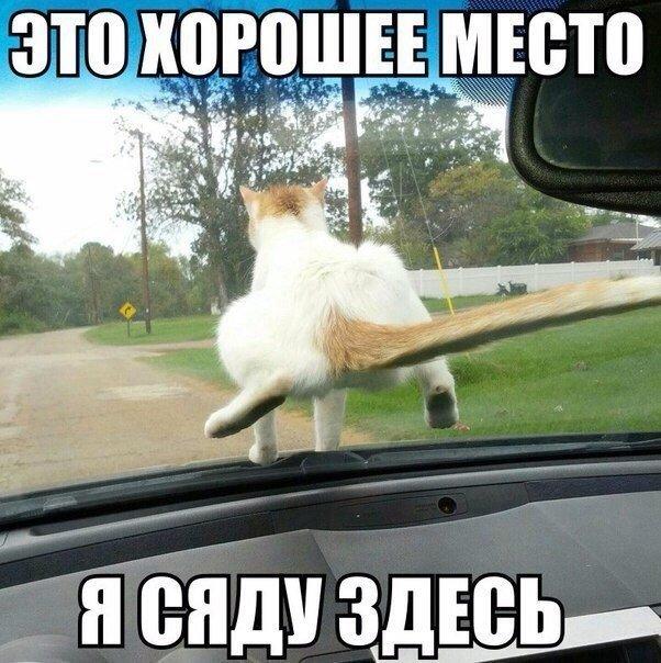 https://pp.vk.me/c540104/v540104577/3e510/uBrgYKEJen8.jpg