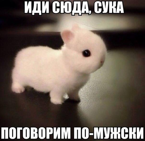 Фото №327777769 со страницы Сергея Прилько