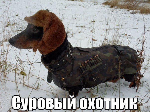 http://cs14107.vk.me/c540104/v540104577/45b2d/YadeAjm1X4Y.jpg