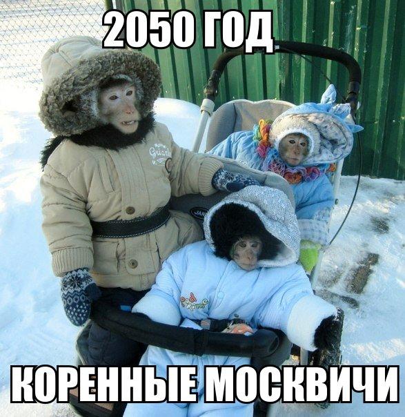 Оппозиция подготовила изменения в Конституцию, которые помогут стране избавиться от диктатора, - Яценюк - Цензор.НЕТ 1305
