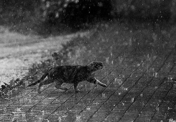 Москву ждет «ветхозаветный» потоп, предупредили синоптики