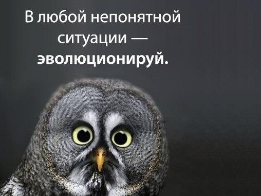 http://cs14110.vk.me/c540104/v540104633/4e70/M3X27FS0ZIU.jpg