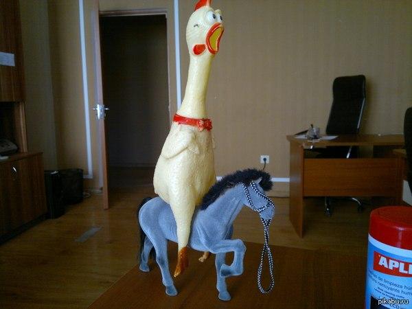 цыплёнок на пони