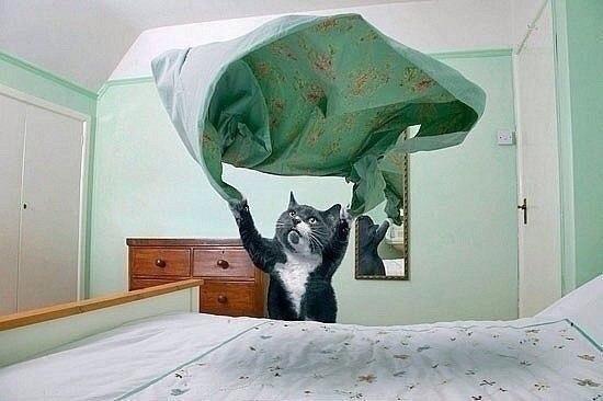 Мне срочно нужен такой кот!!!))))
