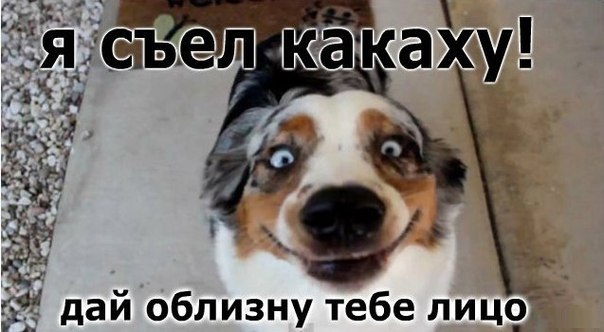 http://cs14115.vk.me/c540104/v540104856/22965/p5vZ0PQ0Aj0.jpg