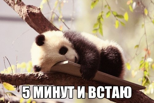 http://cs14115.vk.me/c540104/v540104939/173c8/dZXXqX1NWyc.jpg