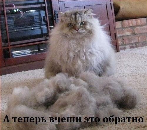 http://cs14115.vk.me/c540104/v540104939/173d6/NeQiNpeW51c.jpg