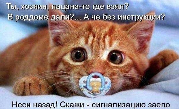 http://cs14102.vk.me/c540104/v540104949/1fc1a/CcsSNLQHBxc.jpg